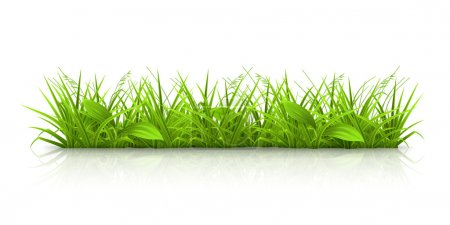 Illustration for Grass, vector - Royalty Free Image