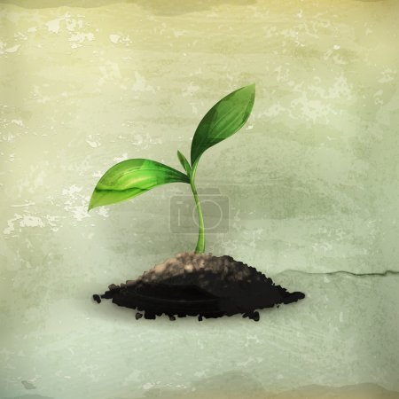 Illustration for Plant, old-style - Royalty Free Image