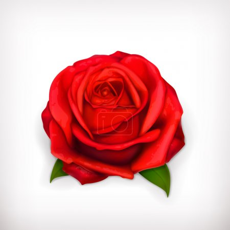 Illustration for Red rose vector - Royalty Free Image