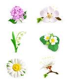 Spring flowers vector set