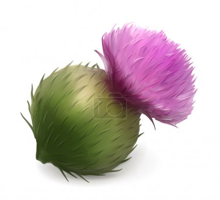 Burdock vector illustration