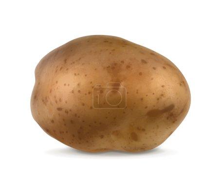 Potato, vector illustration