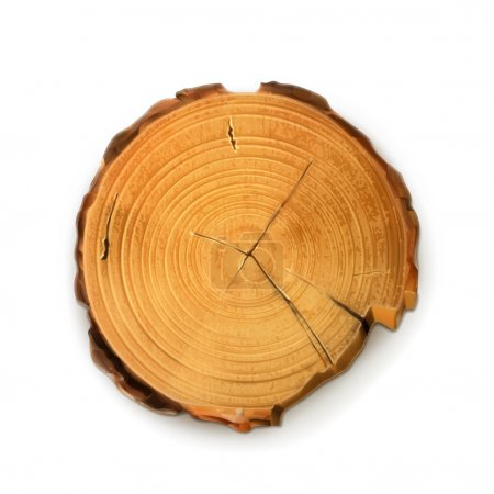 Tree stump, round cut with annual rings vector