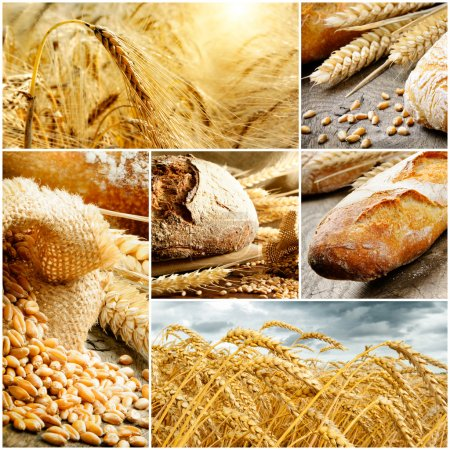 Set of traditional bread, wheat and cereal