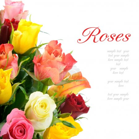 Photo for Bouquet of multicolored roses isolated on white background with copyspace - Royalty Free Image