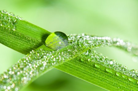Photo for Dewdrops on the green grass leafs. Shallow DOF - Royalty Free Image