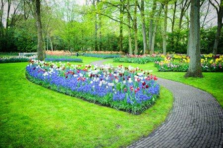 Photo pour Tulipes multicolores à Keukenhof Gardens, Pays-Bas - image libre de droit