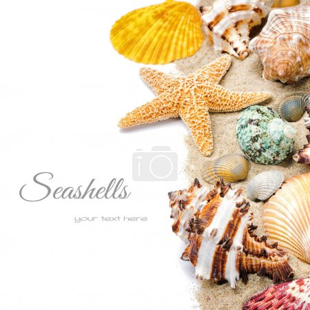 Photo for Colorful seashells with sand isolated over white - Royalty Free Image