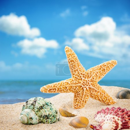 Photo for Sea star and colorful shells on coastline - Royalty Free Image