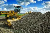 Agricultural vehicle harvesting sugar beets