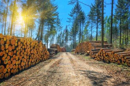 Photo pour Journal des piles le long de la route forestière à jour ensoleillé - image libre de droit