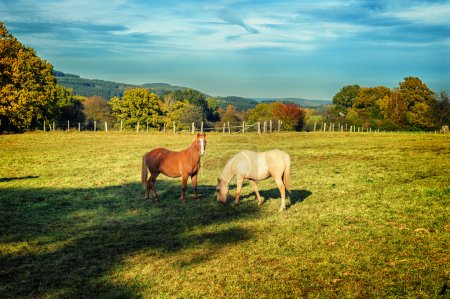 Horses at summer farm field