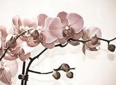 Květy orchidejí, izolovaných na bílém pozadí