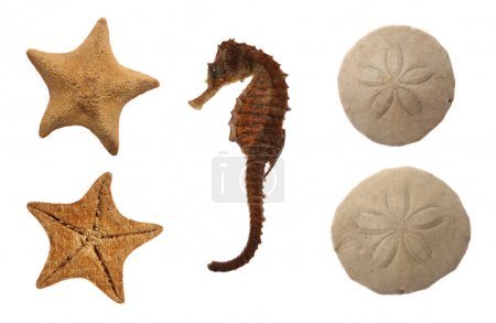 Set of sea animals isolated on white: goose foot s...