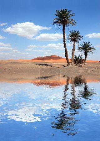 Photo pour Palmiers près du lac dans le désert du sahara, Maroc - image libre de droit