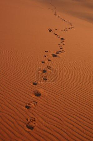 Footsteps in the Sahara Desert