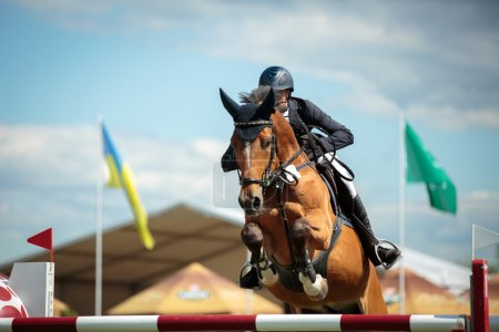 Photo for Horsejumping - Royalty Free Image