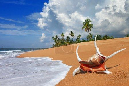 Tropical solitude - beautiful beach scene with sea shell