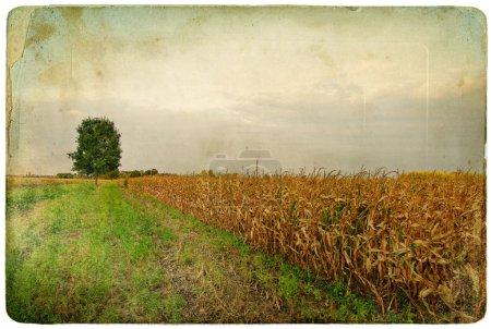 Feld und Baum - künstlerisches Retro-Bild