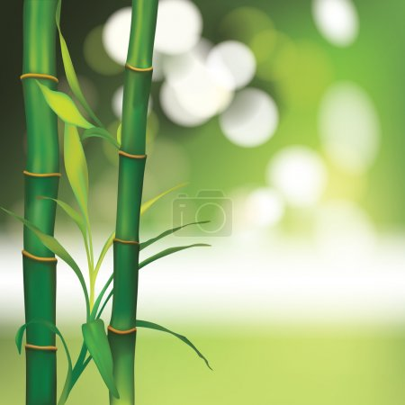 Illustration for Vector Beautiful Spa Background with Bamboo - Royalty Free Image