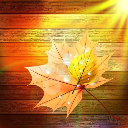 Autumn Leaf template. plus EPS10