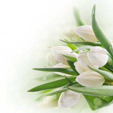 Photo pour Bouquet printanier de tulipes blanches aux feuilles vertes - image libre de droit