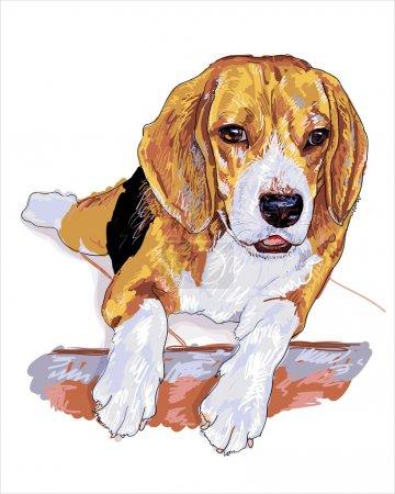 Restung beagle