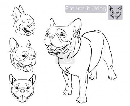 Line art of French bulldog