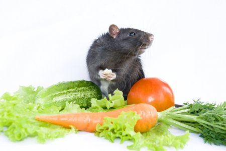 Rat, cheese and vegetables on a white background