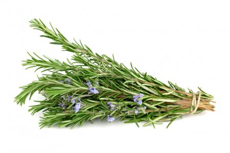 Photo for Rosemary isolated on white - Royalty Free Image
