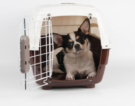 Dog in the pet carrier