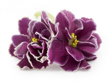 violet, flower