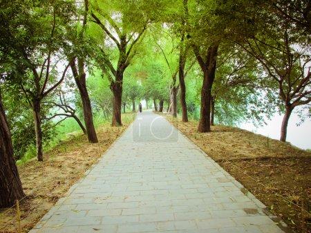 Photo pour Paysage du parc chinois - image libre de droit