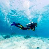 """Постер, картина, фотообои """"силуэт аквалангиста около морского дна"""""""