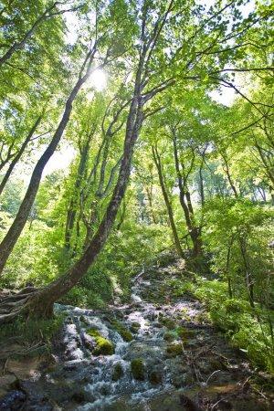 Beautiful forest waterfall in Plitvicka jezera Croatia