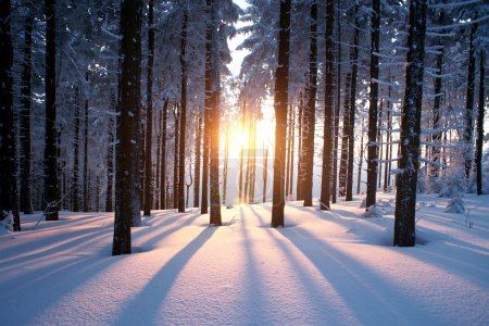Photo for Beautiful sunset in the wood between the trees in winter period - Royalty Free Image
