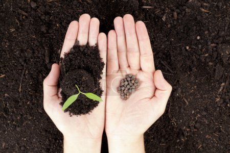 hands with plant and seeds