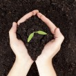 Close-up image of a human's hand holding small plants with soil
