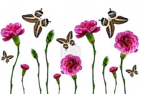 цветы и бабочки на белом фоне