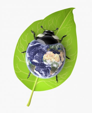 Beetle (Environmental Conservation concept)