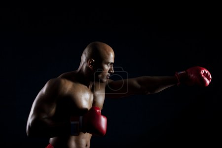 Boxer in a punching position