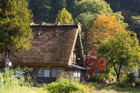 Cottage and rice field in small village shirakawa-go japan. autu