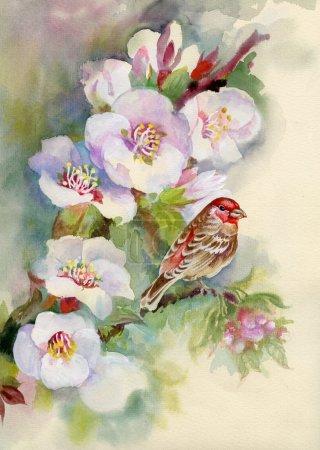 Foto de Rama del Manzano hermosa con un pájaro en él - Imagen libre de derechos