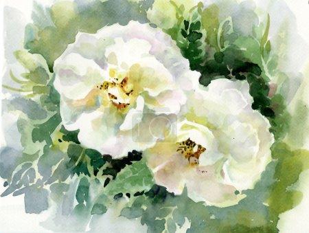 Photo pour Collection aquarelle fleurs : Roses - image libre de droit