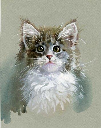 Photo pour Aquarelle Collection animale : Chat gris - image libre de droit
