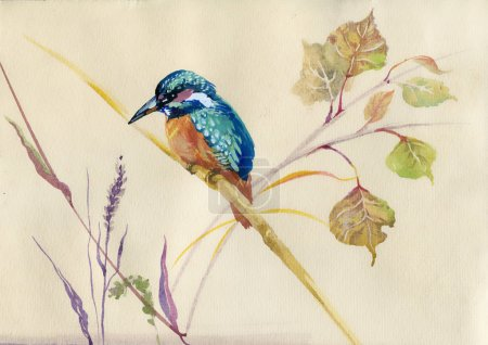 Photo for Watercolor Animal Collection: Common Kingfisher bird - Royalty Free Image