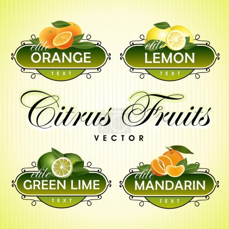 Illustration for Vector images of citrus fruits, design elements in vintage style - Royalty Free Image