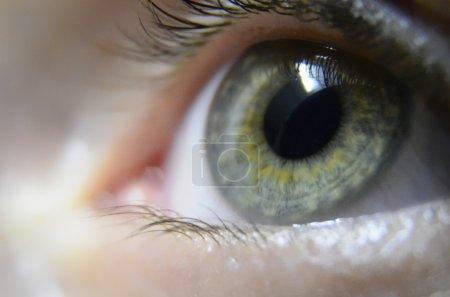 Photo for Eye macro - Royalty Free Image