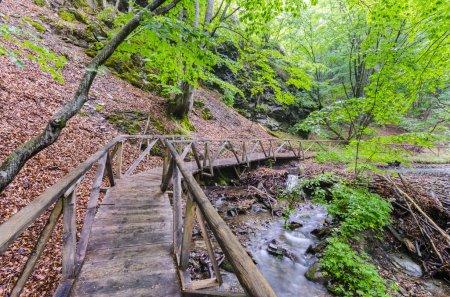 Marzycielski zachwycającej ścieżki w lesie