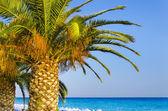 Palms on empty idyllic tropical sand beach